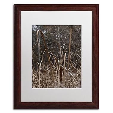Trademark Fine Art Kurt Shaffer 'Cattail Seeds in Flight' 16 x 20 (KS01029-W1620MF)