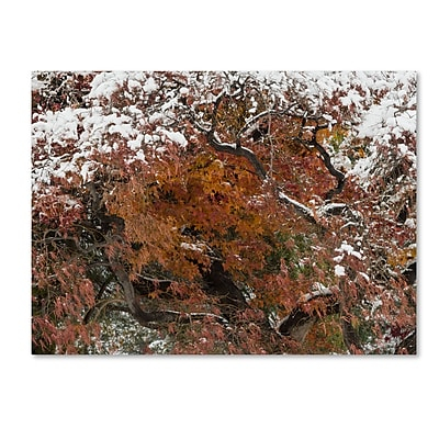 Trademark Fine Art Kurt Shaffer 'Early Snow Fall' 35 x 47 (KS01032-C3547GG)
