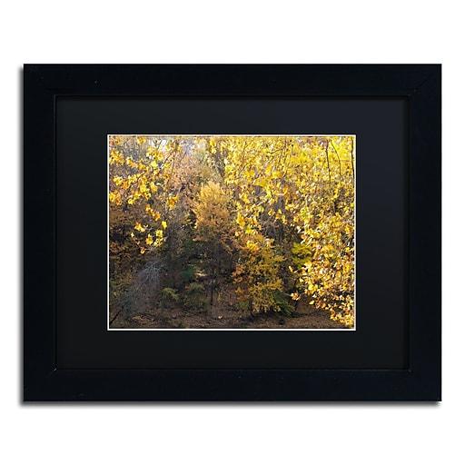 Trademark Fine Art Kurt Shaffer 'Golden Autumn 2'  11 x 14 (886511702806)