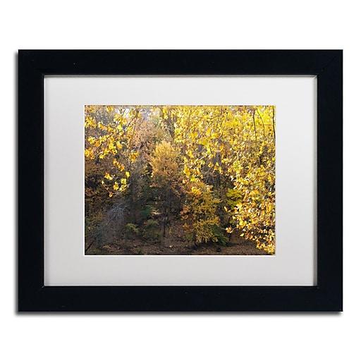 Trademark Fine Art Kurt Shaffer 'Golden Autumn 2'  11 x 14 (KS01034-B1114MF)