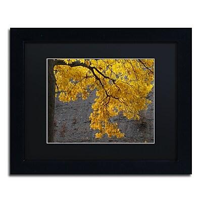 Trademark Fine Art Kurt Shaffer 'Golden Autumn Color' 11 x 14 (886511702905)