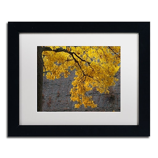 Trademark Fine Art Kurt Shaffer 'Golden Autumn Color'  11 x 14 (KS01035-B1114MF)