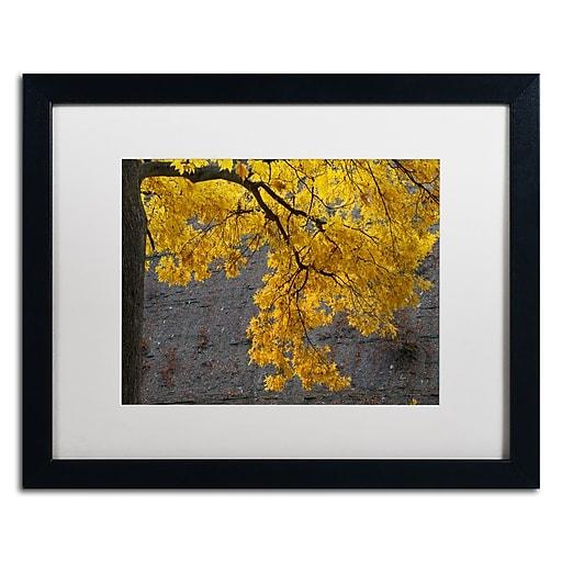 Trademark Fine Art Kurt Shaffer 'Golden Autumn Color'  16 x 20 (KS01035-B1620MF)