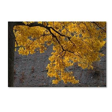 Trademark Fine Art Kurt Shaffer 'Golden Autumn Color' 22 x 32 (KS01035-C2232GG)