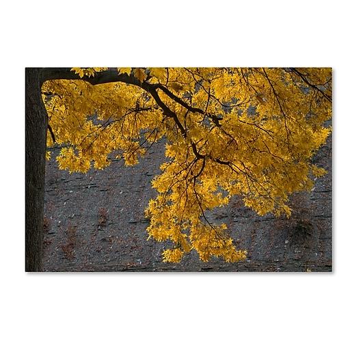 Trademark Fine Art Kurt Shaffer 'Golden Autumn Color'  30 x 47 (KS01035-C3047GG)