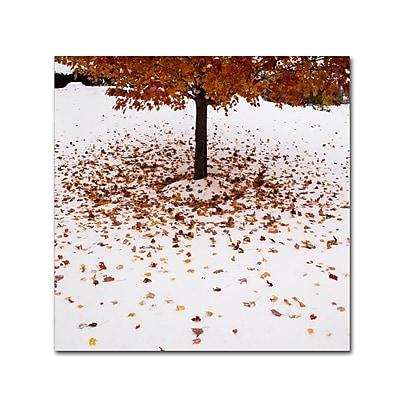 Trademark Fine Art Kurt Shaffer 'Maple Leaves in the Snow' 35 x 35 (KS01040-C3535GG)