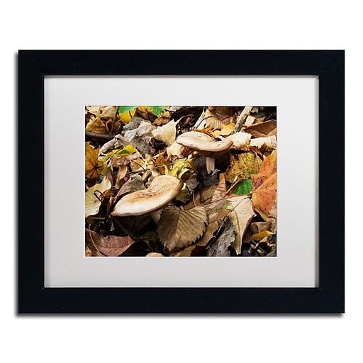 Trademark Fine Art Kurt Shaffer 'Mushrooms in the Leaves'  11 x 14 (KS01041-B1114MF)