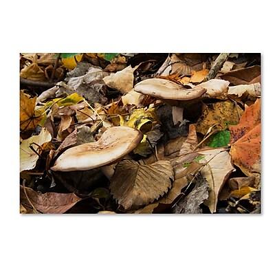 Trademark Fine Art Kurt Shaffer 'Mushrooms in the Leaves' 22 x 32 (KS01041-C2232GG)