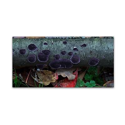 Trademark Fine Art Kurt Shaffer 'Purple Fungi' 12 x 24 (KS01043-C1224GG)