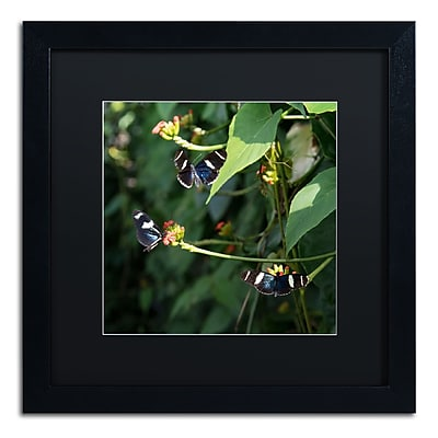 Trademark Fine Art Kurt Shaffer 'Sara Longwing Butterflies' 16 x 16 (886511703605)