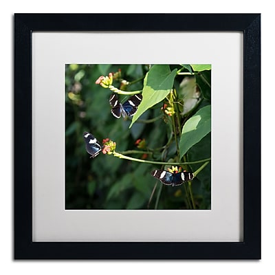 Trademark Fine Art Kurt Shaffer 'Sara Longwing Butterflies' 16 x 16 (KS01045-B1616MF)