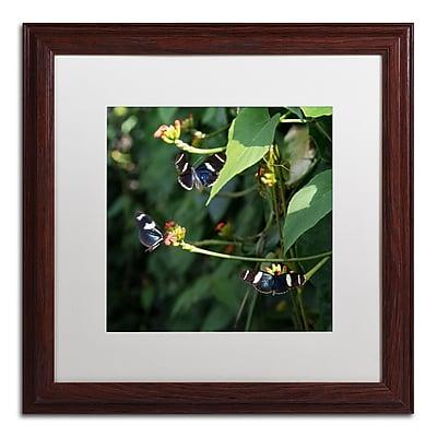 Trademark Fine Art Kurt Shaffer 'Sara Longwing Butterflies' 16 x 16 (KS01045-W1616MF)