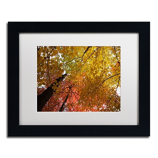 Trademark Fine Art Kurt Shaffer 'Spectacular Brilliant Autumn Trees'  11 x 14 (KS01046-B1114MF)