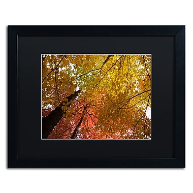 Trademark Fine Art Kurt Shaffer 'Spectacular Brilliant Autumn Trees' 16 x 20 (886511703704)