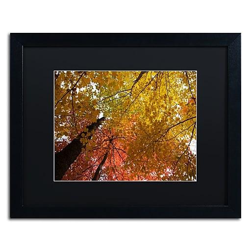 Trademark Fine Art Kurt Shaffer 'Spectacular Brilliant Autumn Trees'  16 x 20 (886511703704)