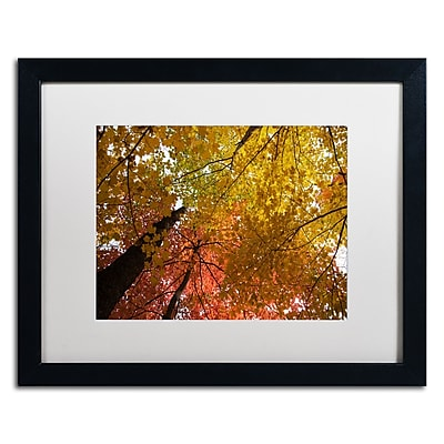 Trademark Fine Art Kurt Shaffer 'Spectacular Brilliant Autumn Trees' 16 x 20 (KS01046-B1620MF)