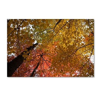 Trademark Fine Art Kurt Shaffer 'Spectacular Brilliant Autumn Trees' 12 x 19 (KS01046-C1219GG)
