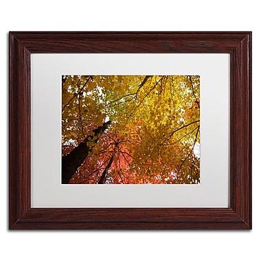 Trademark Fine Art Kurt Shaffer 'Spectacular Brilliant Autumn Trees' 11 x 14 (KS01046-W1114MF)