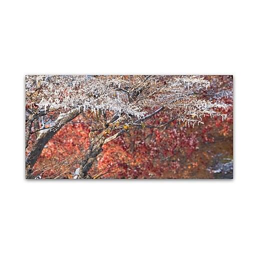 Trademark Fine Art Kurt Shaffer 'Struggle Between Autumn and Winter'  10 x 19 (KS01048-C1019GG)