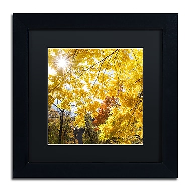 Trademark Fine Art Kurt Shaffer 'Sunny Happy Autumn Day' 11 x 11 (886511703926)