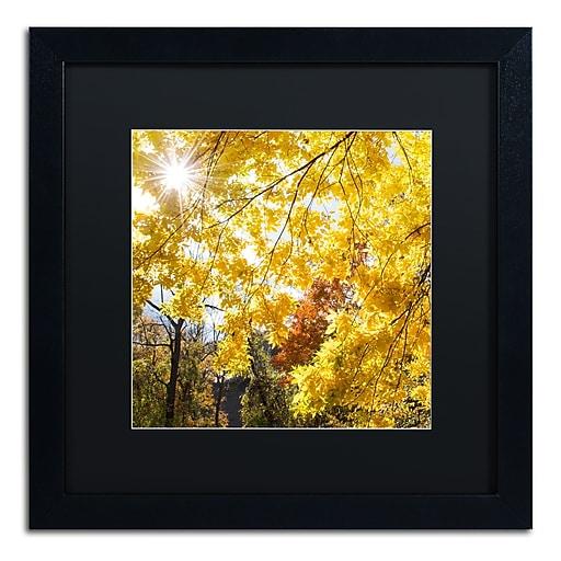 Trademark Fine Art Kurt Shaffer 'Sunny Happy Autumn Day'  16 x 16 (886511703940)