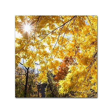 Trademark Fine Art Kurt Shaffer 'Sunny Happy Autumn Day' 35 x 35 (KS01049-C3535GG)