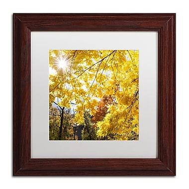 Trademark Fine Art Kurt Shaffer 'Sunny Happy Autumn Day' 11 x 11 (KS01049-W1111MF)