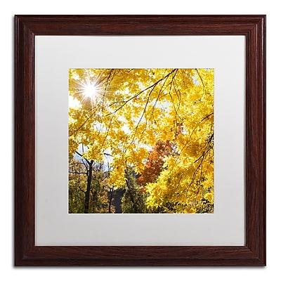 Trademark Fine Art Kurt Shaffer 'Sunny Happy Autumn Day' 16 x 16 (KS01049-W1616MF)