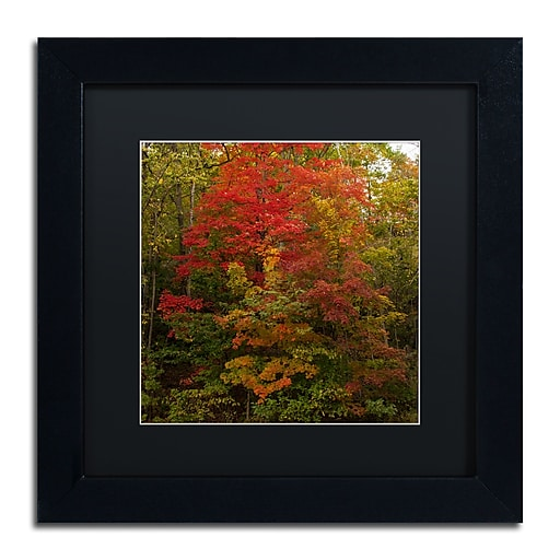 Trademark Fine Art Kurt Shaffer 'Why I Love Autumn 2'  11 x 11 (886511704220)