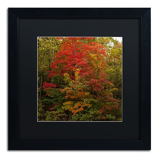 Trademark Fine Art Kurt Shaffer 'Why I Love Autumn 2'  16 x 16 (886511704244)