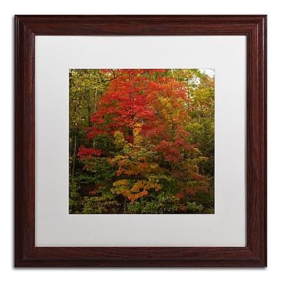Trademark Fine Art Kurt Shaffer 'Why I Love Autumn 2' 16 x 16 (KS01052-W1616MF)