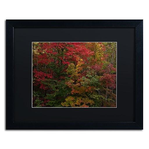 Trademark Fine Art Kurt Shaffer 'Why I Love Autumn'  16 x 20 (886511704442)
