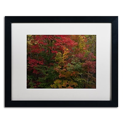 Trademark Fine Art Kurt Shaffer 'Why I Love Autumn' 16 x 20 (KS01054-B1620MF)