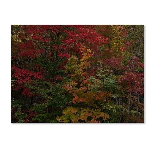 Trademark Fine Art Kurt Shaffer 'Why I Love Autumn'  35 x 47 (KS01054-C3547GG)