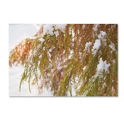 Trademark Fine Art Kurt Shaffer 'Winter on Redwood' 22 x 32 (KS01055-C2232GG)