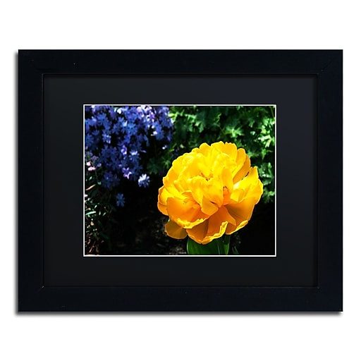 Trademark Fine Art Kurt Shaffer 'Yellow Double Headed Tulip'  11 x 14 (886511704626)