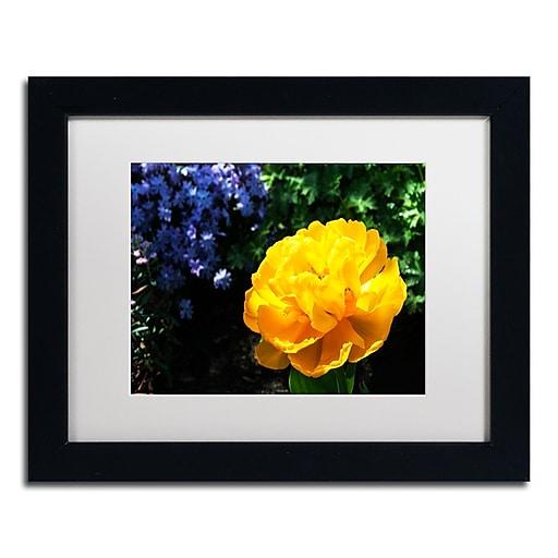 Trademark Fine Art Kurt Shaffer 'Yellow Double Headed Tulip'  11 x 14 (KS01056-B1114MF)