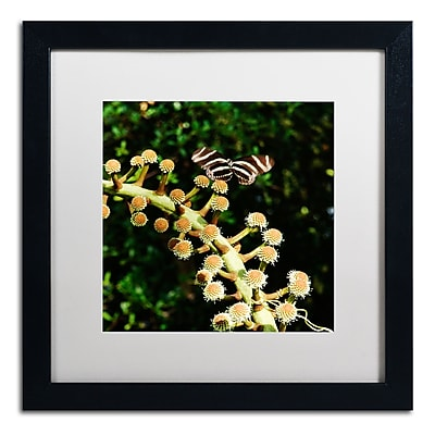 Trademark Fine Art Kurt Shaffer 'Zebra Longwing Butterfly' 16 x 16 (KS01057-B1616MF)