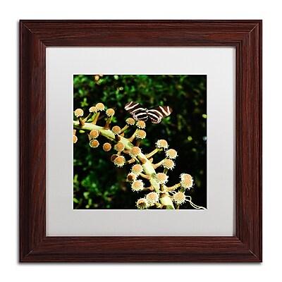 Trademark Fine Art Kurt Shaffer 'Zebra Longwing Butterfly' 11 x 11 (KS01057-W1111MF)