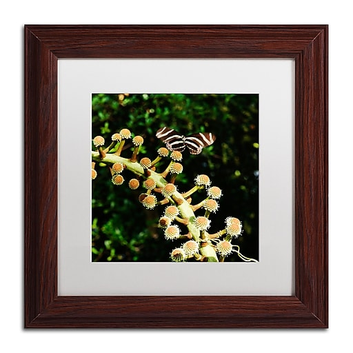Trademark Fine Art Kurt Shaffer 'Zebra Longwing Butterfly'  11 x 11 (KS01057-W1111MF)