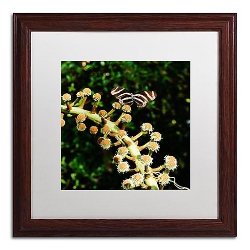 Trademark Fine Art Kurt Shaffer 'Zebra Longwing Butterfly'  16 x 16 (KS01057-W1616MF)