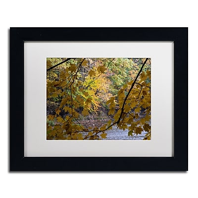 Trademark Fine Art Kurt Shaffer 'Brilliant Ohio Autumn' 11 x 14 (KS01059-B1114MF)