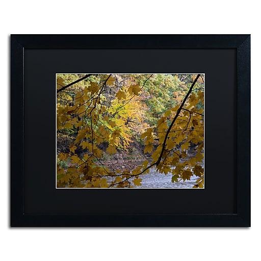 Trademark Fine Art Kurt Shaffer 'Brilliant Ohio Autumn'  16 x 20 (886511704947)