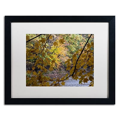 Trademark Fine Art Kurt Shaffer 'Brilliant Ohio Autumn' 16 x 20 (KS01059-B1620MF)