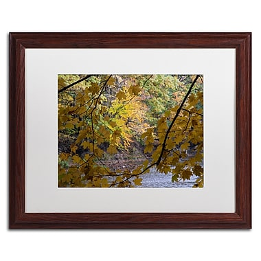 Trademark Fine Art Kurt Shaffer 'Brilliant Ohio Autumn' 16 x 20 (KS01059-W1620MF)
