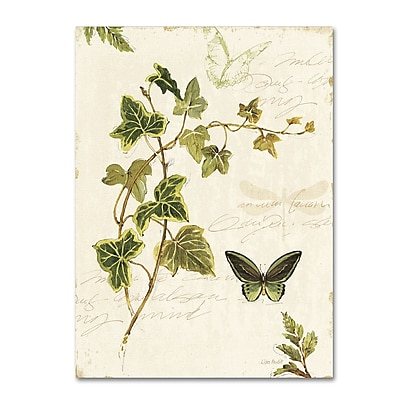 Trademark Fine Art Lisa Audit 'Ivies and Ferns IV' 24 x 32 (WAP0220-C2432GG)