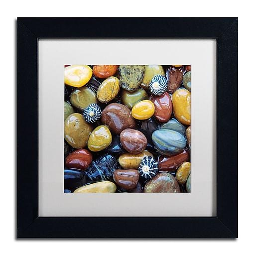 Trademark Fine Art David Evans 'Shells & Pebbles'  11 x 11 (DE0118-B1111MF)