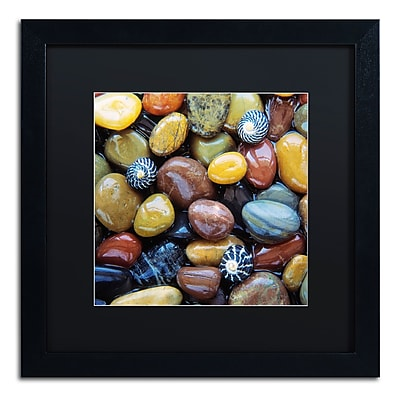 Trademark Fine Art David Evans 'Shells & Pebbles' 16 x 16 (DE0118-B1616BMF)
