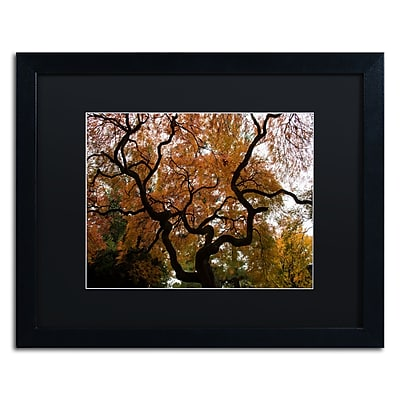 Trademark Fine Art Kurt Shaffer 'Brilliant Japanese Maple Abstract' 16 x 20 (886511702110)
