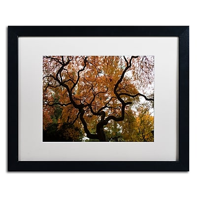 Trademark Fine Art Kurt Shaffer 'Brilliant Japanese Maple Abstract' 16 x 20 (KS01026-B1620MF)